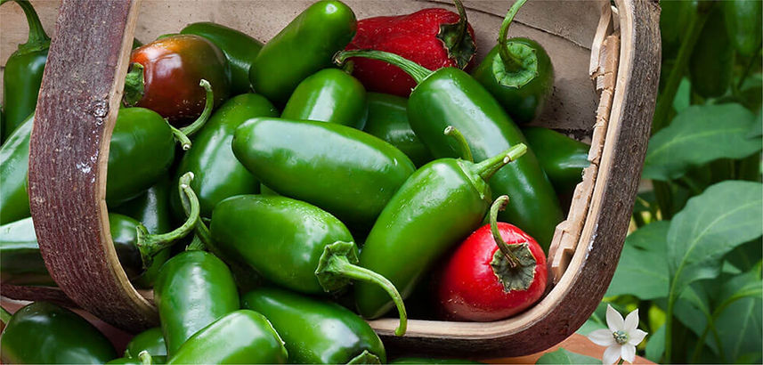 Locally grown Jalapeno's Pepper Jelly