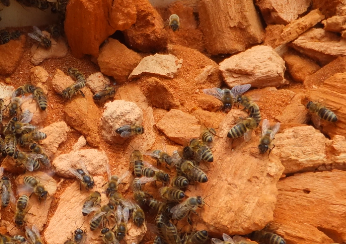 Bienen am Totholz.PNG
