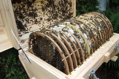 3. Generation der Bienenkugel | Modell BK-20
