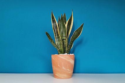 plant-g9e453de6a_1280.jpg