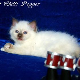 w6 H2-Wurf Hot Chilli Pepper 2.jpg