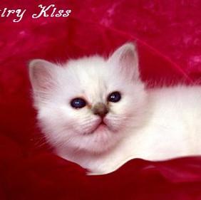 u2 F2-Wurf Fairy Kiss 2.jpg
