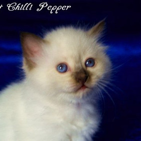 w5 H2-Wurf Hot Chilli Pepper 1.jpg