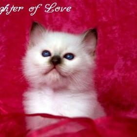 u4 F2-Wurf Fighter of Love 2.jpg