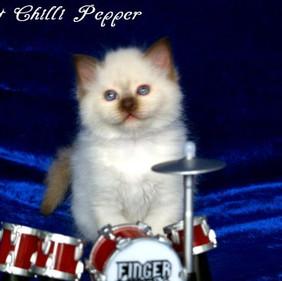 w8 H2-Wurf Hot Chilli Pepper 4.jpg