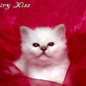 u1 F2-Wurf Fairy Kiss 1.jpg