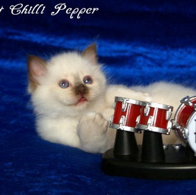 w7 H2-Wurf Hot Chilli Pepper 3.jpg
