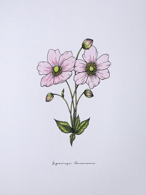 Japanese Anenome