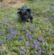 Jemma in Garden.jpg