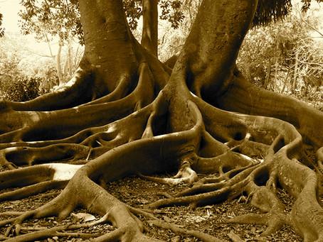 Держитесь корней: Бхарани, Магха, Мула