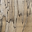 Thumbnail: Spalted Maple Pair of Boards SMP2
