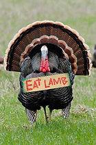 turkey eat lamb.jpg