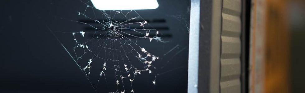 Von Spinnen lernen.