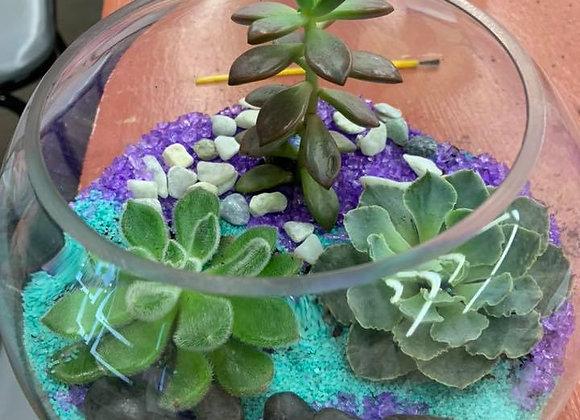 Succulent Terrarium Cancelled