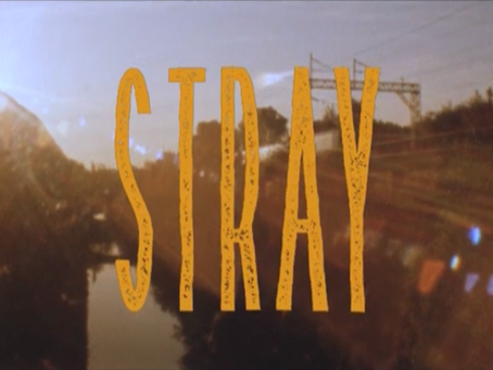 Wolftown Skateboards 'Stray' video online now!