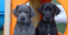 clamity & lil  conlan & pups 006.jpg