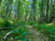 jeune-rando-energie-forêt-bourgogne.jpeg