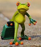 Newbie-frog_edited.jpg