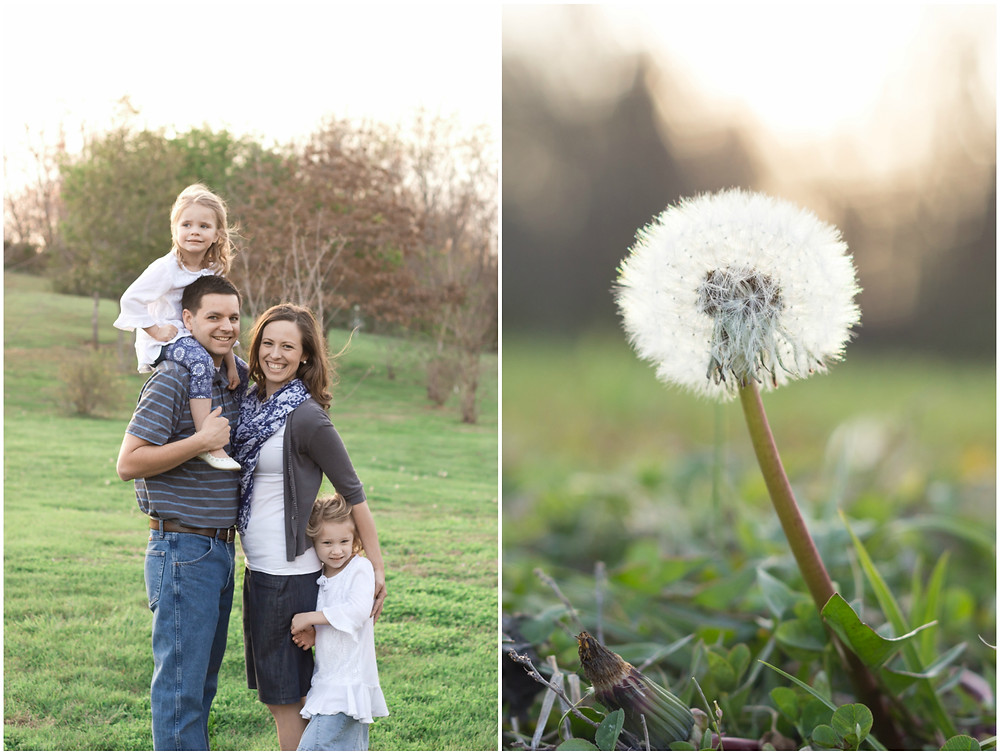 A family in a park with little girl on dad's shoulders and a dandelion
