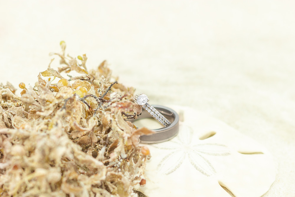 Wedding and engagement rings on a sand dollar