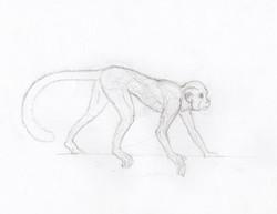 monkey++walks