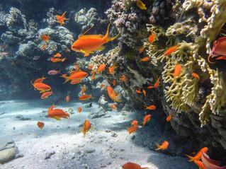 Diving in Eilat