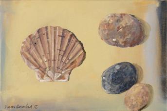 scallop shell & pebbles