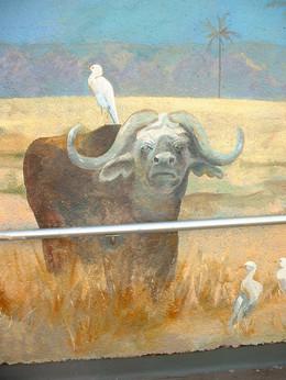 Water buffalo & eigret