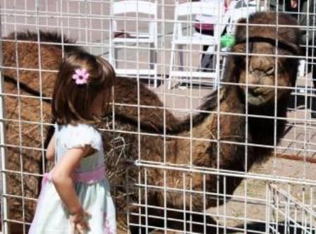 camel20132.jpg