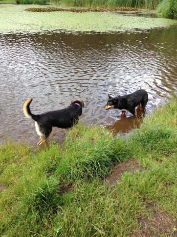 Dorset-Dog-Walking-Bournemouth-Queens-Pa