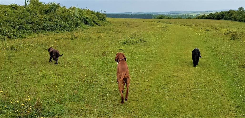 Dorset-Dog-Walking-Walker-Dorset-Wimborn