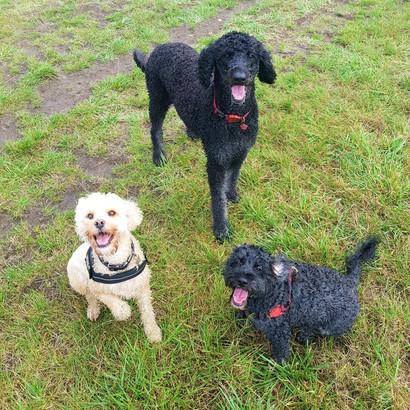 Dorset-Dog-Walking-Walker-Reliable-Profe