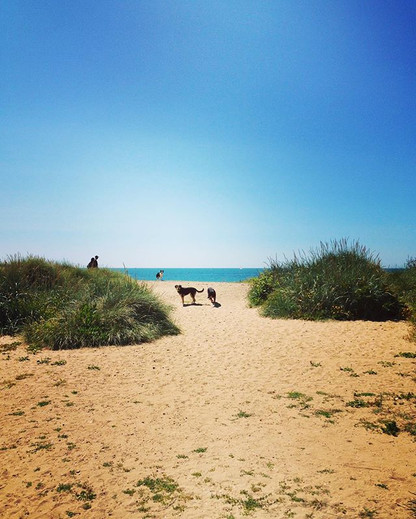 It really is a #dogslife in #Bournemouth