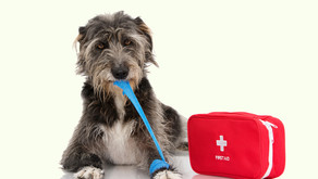 Doggy First Aid Kit Checklist