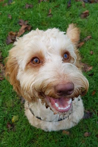 Dorset Dog Walking Miley Fun adventures