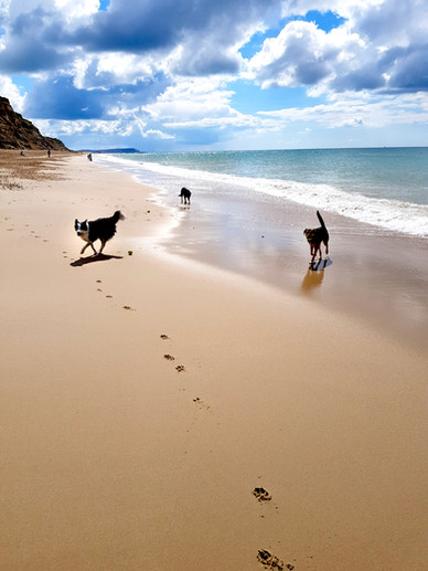 Dorset-Dog-Walking-Hengistbury-Head-Bour