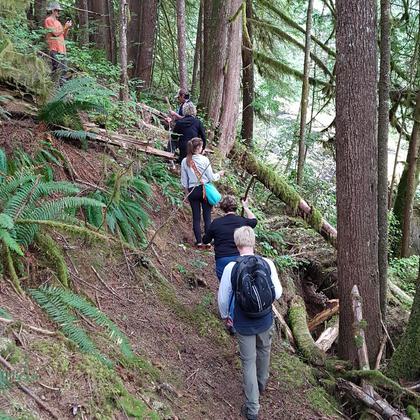 Coastal Rainforest Hiking