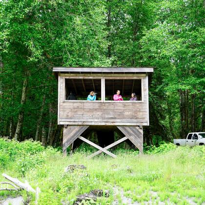 Toba Inlet Bear Viewing Platform