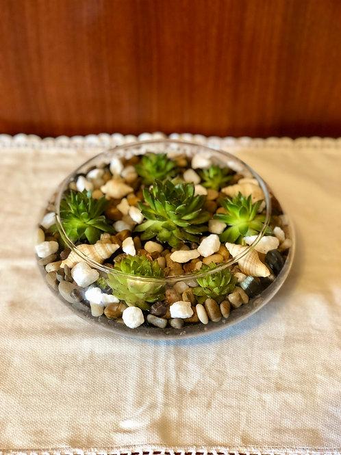 Pecera Cactus Echeveria