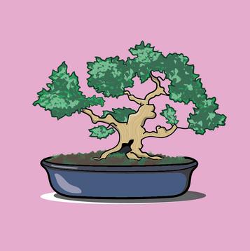 Bonsai 1.png