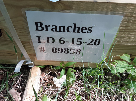 Branches!