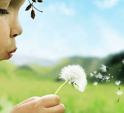 child-girl-blowing-dandelion-taraxacum-f