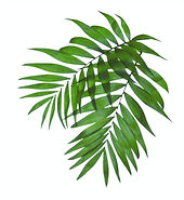 Palm%20Tree%20Leaves_edited.jpg