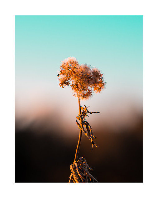 Blowing In The Wind | Sussex
