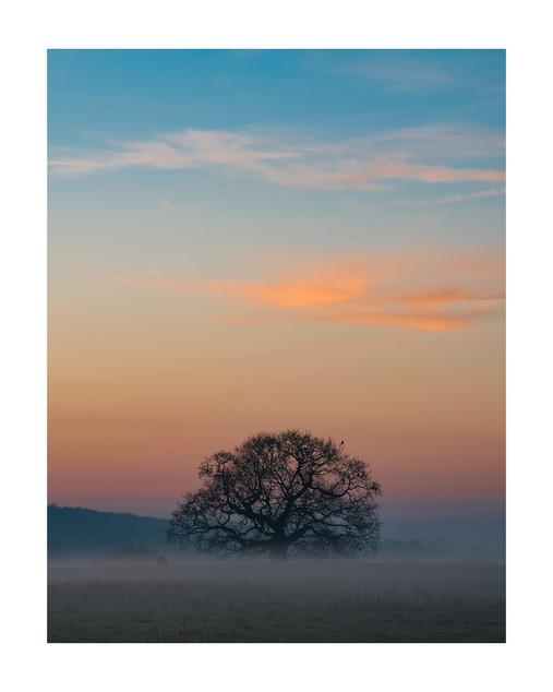 Rising Mist | Sheffield Park