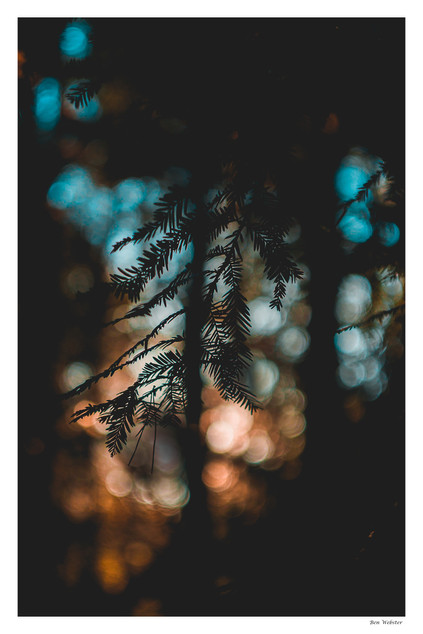 Woodland Silhouette | Sussex