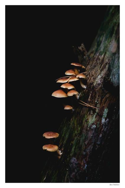 Autumn Growth 3 | Sussex