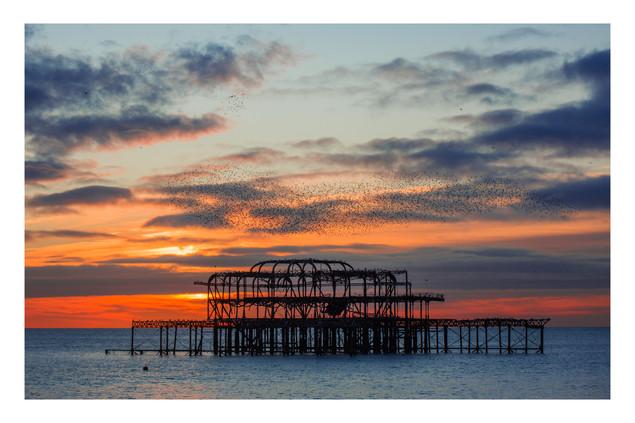 Murmuration 1 | Brighton