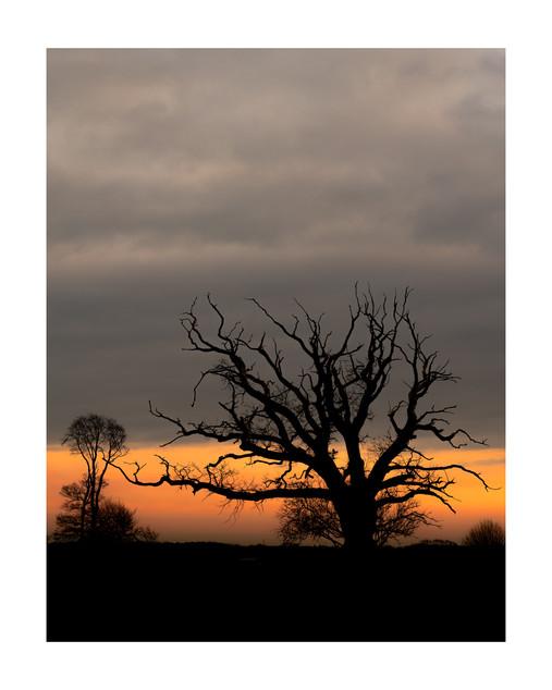 Winter Silhouette | Sheffield Park
