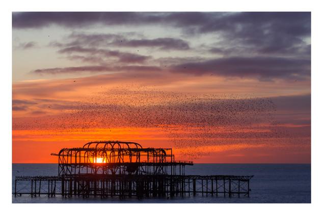 Murmuration 3 | Brighton